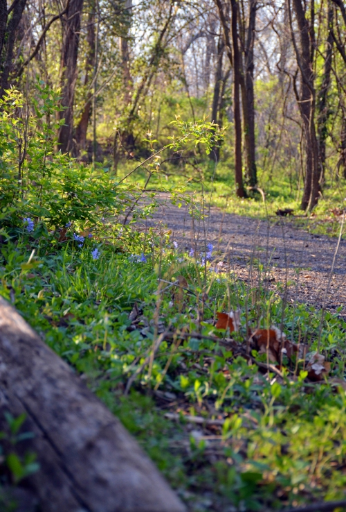 Along the trail, little blue wildflowers brighten the way.