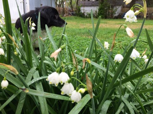 Snowdrops and Kaitlin