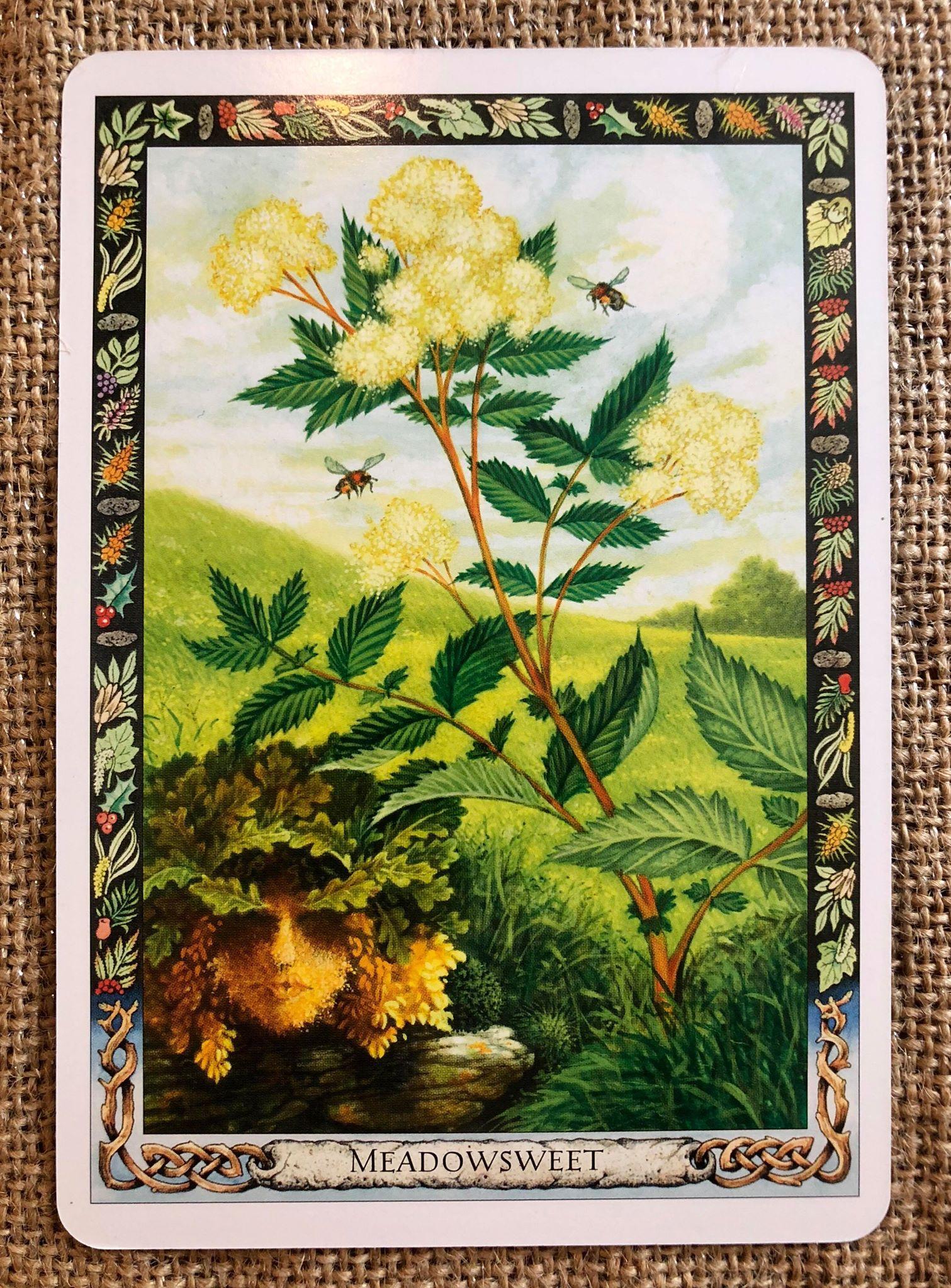 Druid Plant Oracle Meadowsweet.jpg
