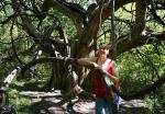 Dragon Tree PJ