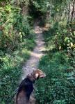 Maddie on trail